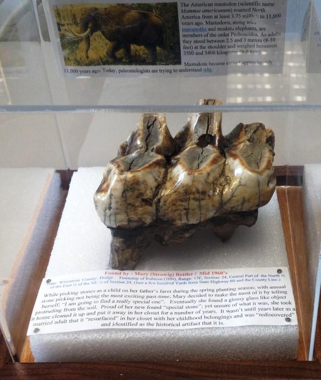 Mastodon Tooth